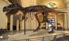 """هيكل عظمي لديناصور """"ديبلودوكس"""" يباع في بأكثر من نصف مليون دولار"""
