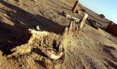 العثور على أحفورة هيكل عظمي لحوت عملاق في مصر