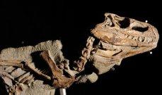 إكتشاف آثار ديناصور في منجم للفوسفات في المغرب