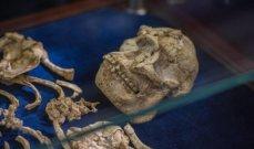 العثور على أقدم هيكل عظمي لمخلوق شبيه بالإنسان