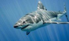 نجمة خليجية تتعرض لهجوم القرش أثناء سباحتها وتنجو بأعجوبة- بالفيديو